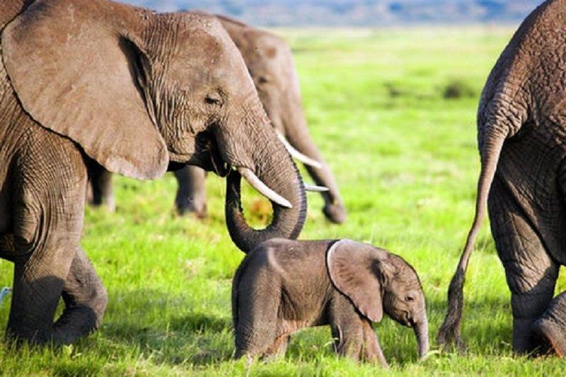 کاهش 60 درصدی جمعیت حیات وحش دنیا